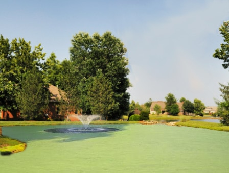 Image of pond covered with duckweed and watermeal prior to treating with fluridone herbicide
